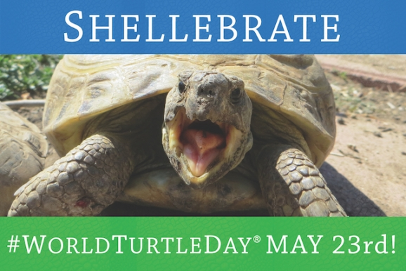 Shellebrate World Turtle Day